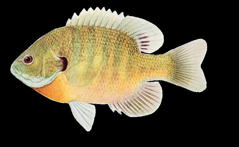 Ile znasz ryb?